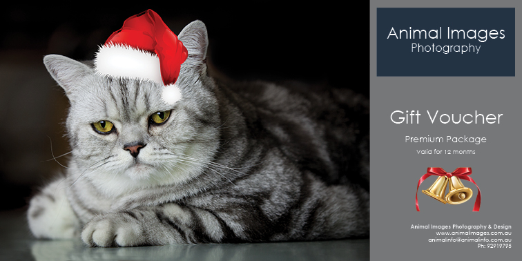 Christmas Pet photography gift voucher.